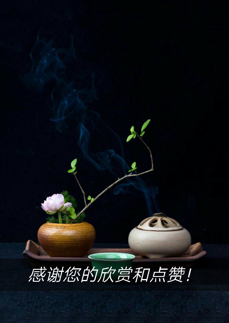 舌尖的中国  胃里的中国