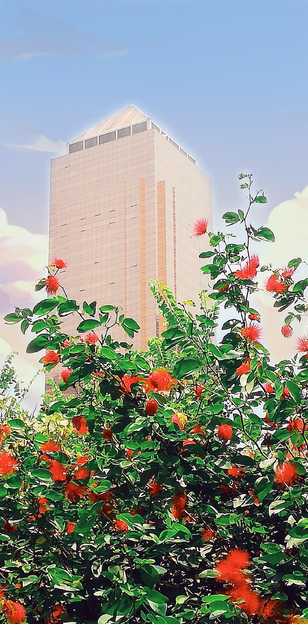 自然生命形式一庭院植物 朱樱苏铁叶子榕树