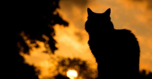 五次冲进大火的猫妈妈,五个着火的小猫和一群哭看的人类!