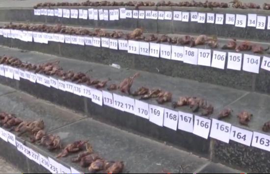 武汉疫情15天后 澳洲30万蝙蝠 尸横遍野 有一个真相终于藏不住