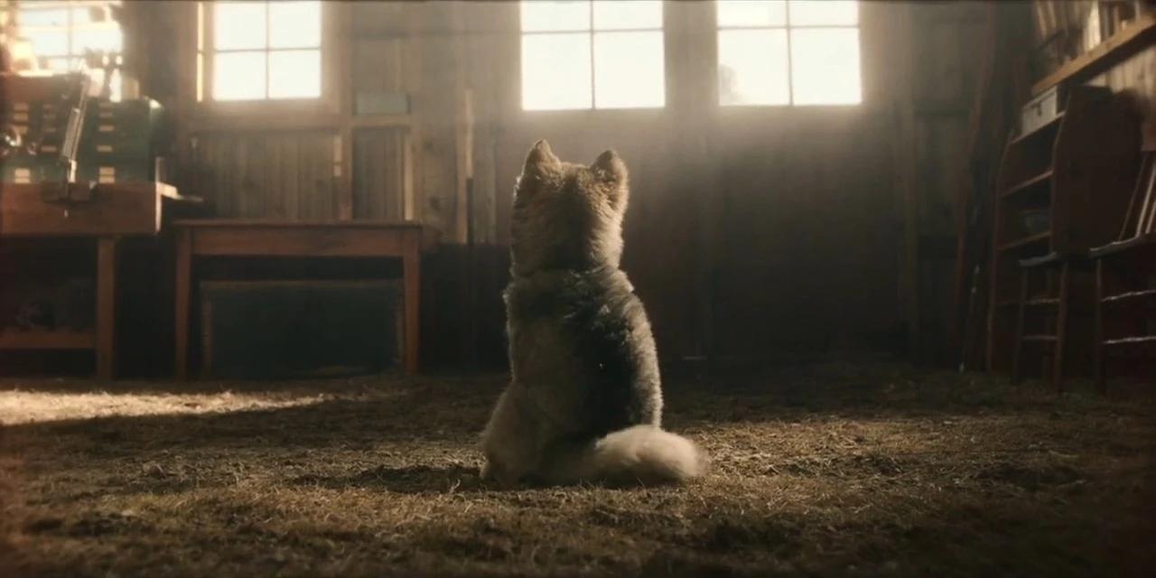 电影《多哥》太励志了 看完感动到爆哭