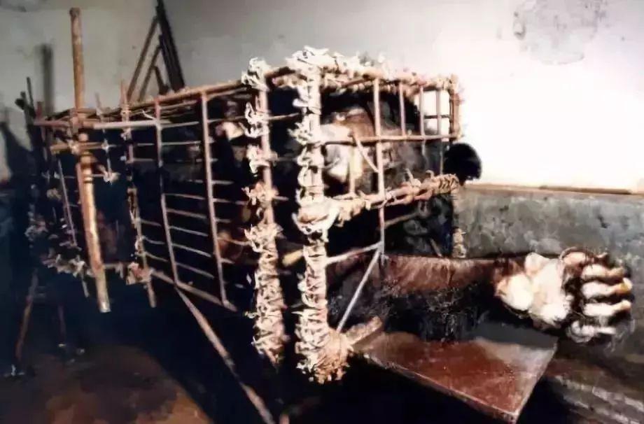 中国疫情刚好转   另一场危及70亿人   生命的灾难还在发生……