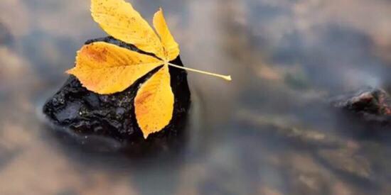 摄影师 为何都喜欢秋天?