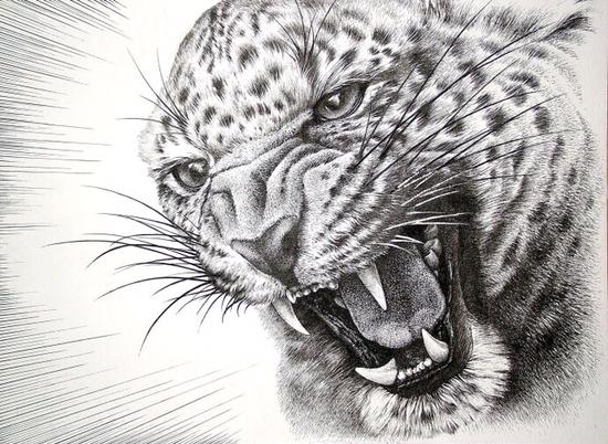 这不是摄影这是钢笔勾勒的动物世界